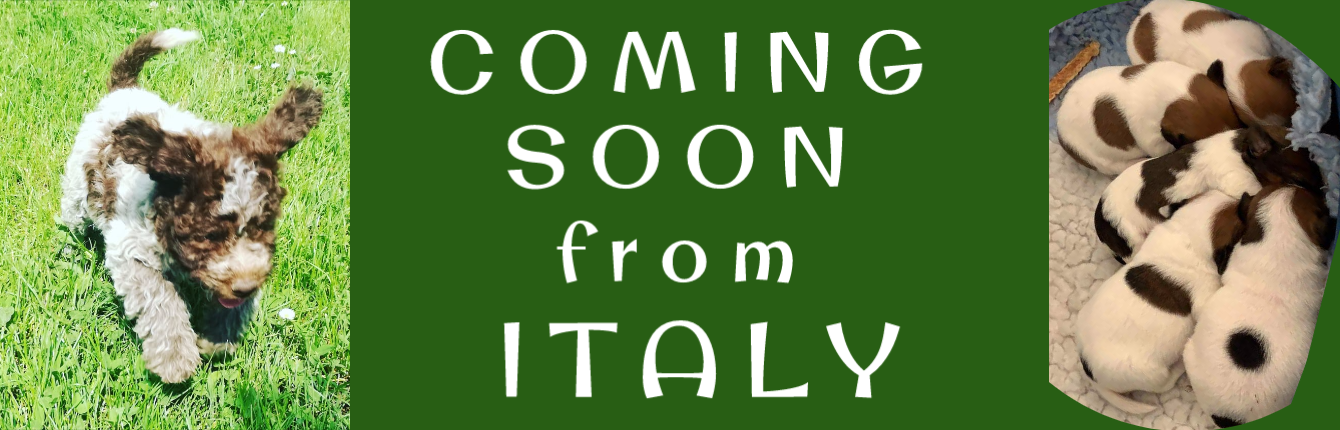 Coming soon from Italy