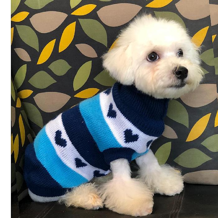 maltese puppy for sale in dubai uae