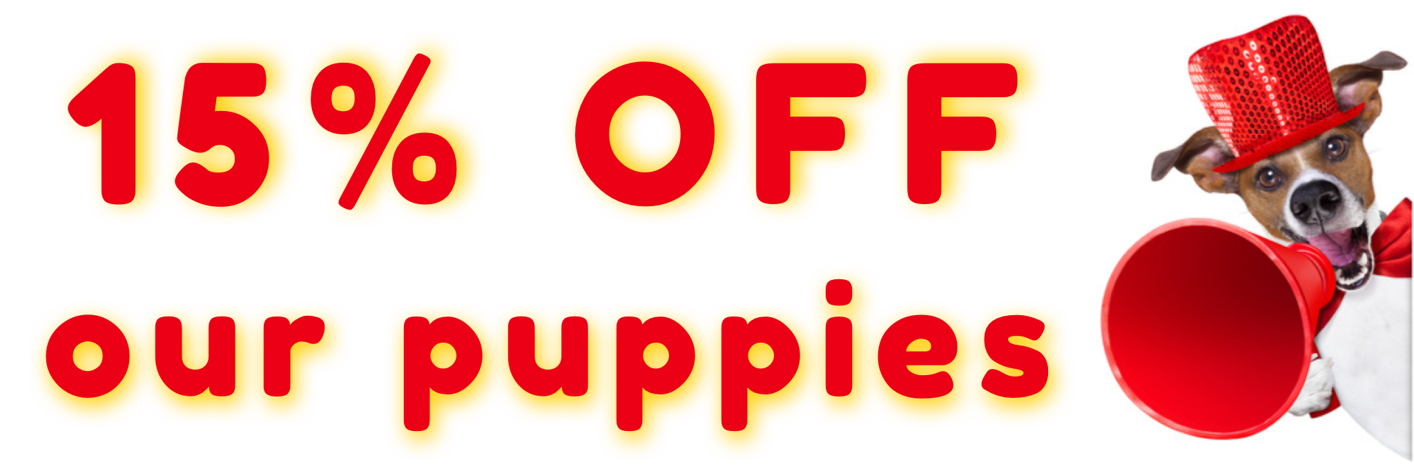 Puppies for sale in UAE